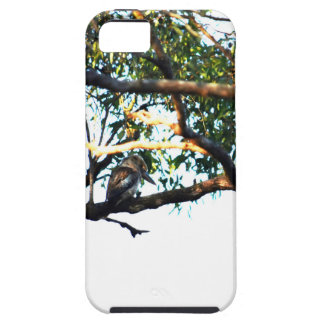 CAPAS PARA iPhone 5 KOOKABURRA QUEENSLAND RURAL AUSTRÁLIA