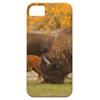 Capas Para iPhone 5 Nação da família do bisonte