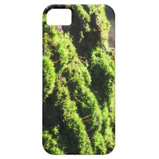 Capas Para iPhone 5 O musgo verde no detalhe da natureza de musgo
