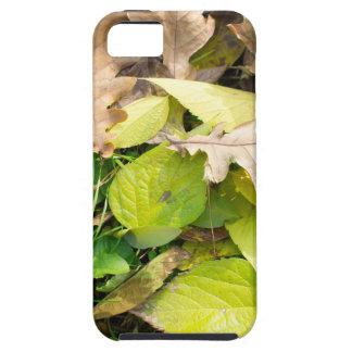 Capas Para iPhone 5 Opinião do Fim-acima nas folhas de outono caídas