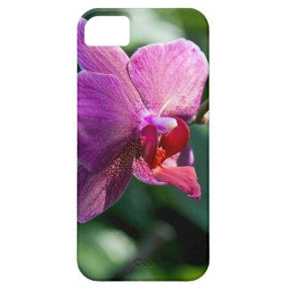 Capas Para iPhone 5 Orquídea mágica