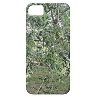 Capas Para iPhone 5 Os ramos de oliveira com primeiros brotam