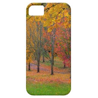 Capas Para iPhone 5 Parque com as árvores de bordo alinhadas árvore no