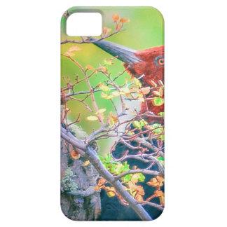 Capas Para iPhone 5 Pica-pau em Pecking da floresta