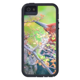 Capas Para iPhone 5 Pica-pau na floresta que Pecking a árvore
