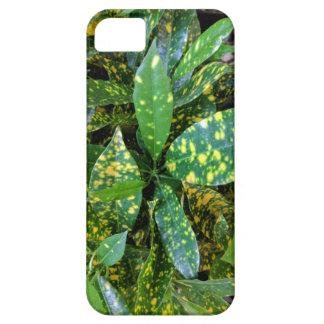 Capas Para iPhone 5 Planta do Croton