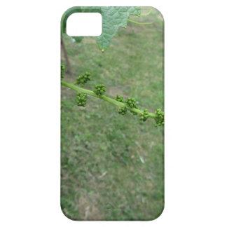 Capas Para iPhone 5 Primeiros botões na árvore de mulberry branco