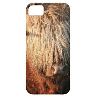 Capas Para iPhone 5 Scottish país de alto Cow - Scotland