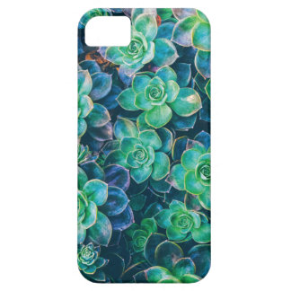 Capas Para iPhone 5 Succulents, Succulent, cacto, cactos, verde,