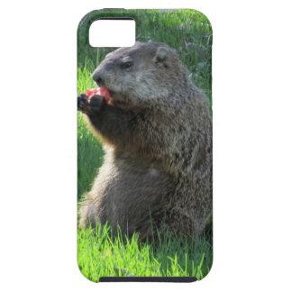Capas Para iPhone 5 Tomate Groundhog