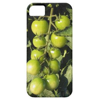 Capas Para iPhone 5 Tomates verdes que penduram na planta no jardim
