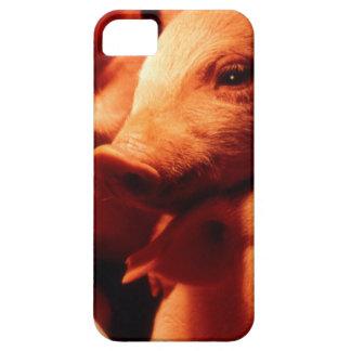 Capas Para iPhone 5 Três porcos pequenos