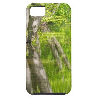 Capas Para iPhone 5 Troncos de árvore da faia com água na floresta do