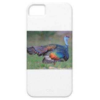 Capas Para iPhone 5 Turquia Ocellated em Guatemala