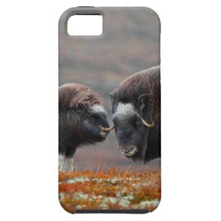 Capas Para iPhone 5 Um boi e uma vitela de Musk