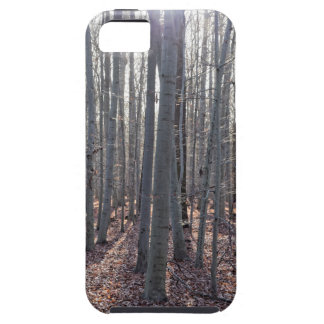 Capas Para iPhone 5 Uma floresta da faia na queda