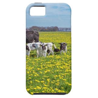 Capas Para iPhone 5 Vaca com as vitelas que pastam no prado com