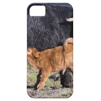 Capas Para iPhone 5 Vaca e jovens escoceses pretos da mãe do escocês