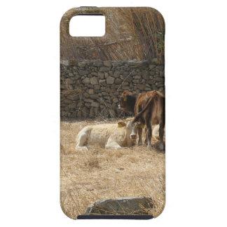 Capas Para iPhone 5 Vacas