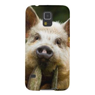 Capinha Galaxy S5 Dois porcos - fazenda de porco - fazendas da carne