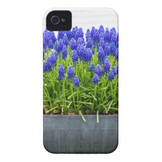 Capinha iPhone 4 Caixa cinzenta da flor do metal com os jacintos de