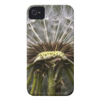 Capinha iPhone 4 dente-de-leão