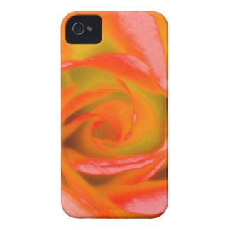 Capinha iPhone 4 Fim-acima cor-de-rosa da laranja