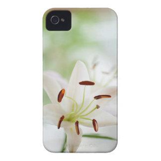 Capinha iPhone 4 Flor do lírio branco inteiramente aberta