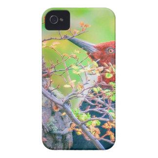 Capinha iPhone 4 Pica-pau em Pecking da floresta