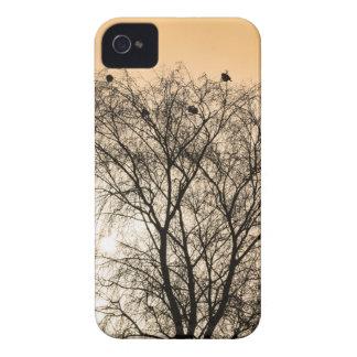 Capinha iPhone 4 Sepia que Roosting pássaros