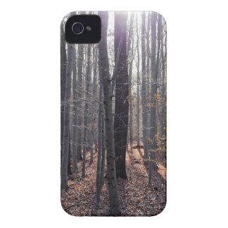 Capinha iPhone 4 Uma floresta da faia na queda