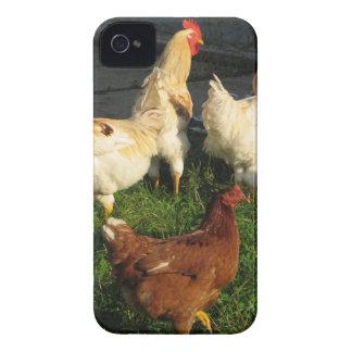 Capinhas iPhone 4 Aves domésticas