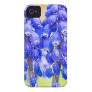 Capinhas iPhone 4 Dois jacintos de uva azuis no primavera