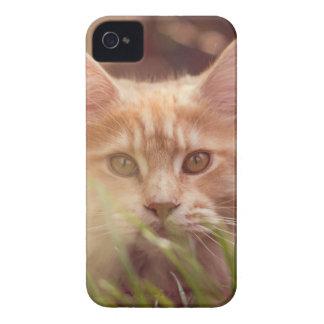 Capinhas iPhone 4 gato