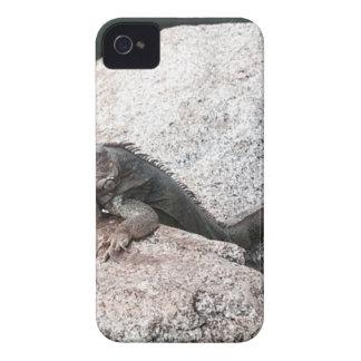 Capinhas iPhone 4 Iguana selvagem