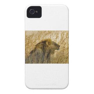 Capinhas iPhone 4 Um leão espera, Zimbabwe África