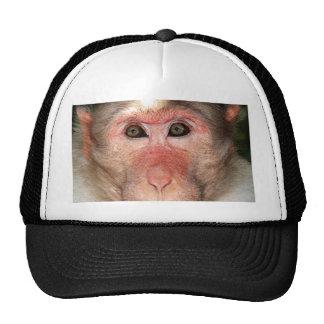 Cara de um macaco bones