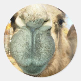 Cara do camelo adesivo em formato redondo