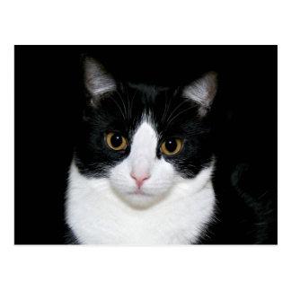 Cara do gato cartão postal