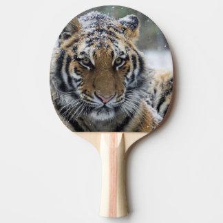 Cara do tigre do inverno raquete de ping-pong