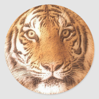 Cara do tigre - etiqueta