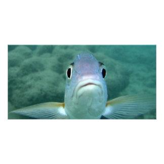 Cara dos peixes cartão com foto