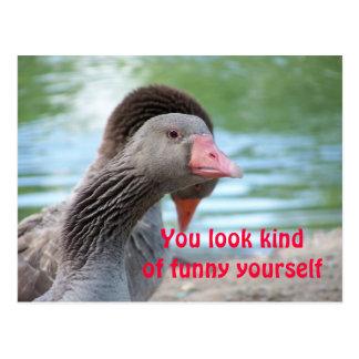 Cara engraçada cartão postal