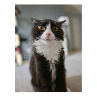 Cara engraçada do gato cartão postal