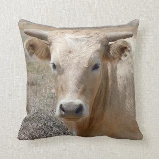 Cara ocidental bonito da vaca do charolês travesseiro de decoração