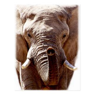 Cara selvagem do animal da cabeça do elefante de cartão postal