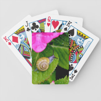 caracol cartas de baralho