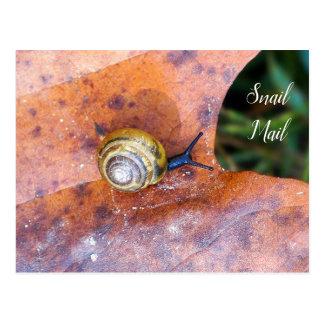 Caracol no cartão do snail mail da folha de Brown