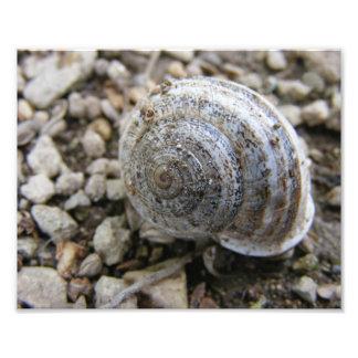Caracol Shell Impressão De Foto