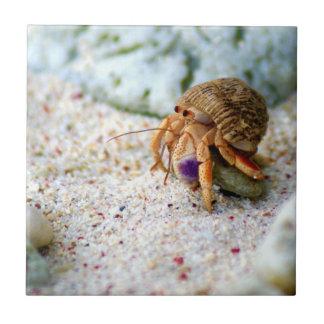Caranguejo da areia, Curaçau, ilhas das Caraíbas,